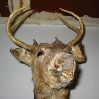 Horrible Taxidermy