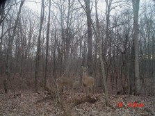 How many deer can you see?