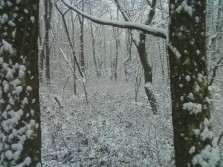 Hunting in the snow in 4C this past November in Pennsylvania