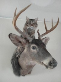 Marley Hanging out with Buck the buck !