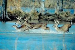 My Favorite Deer Photo