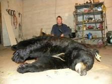 Pa Record Black Bear
