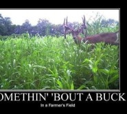 some thing bout a buck
