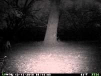 Strange Deer on Camera
