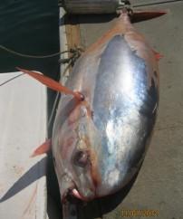 Strange Fish Caught Then Stolen