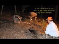 Strange: Mule deer attacks down buck