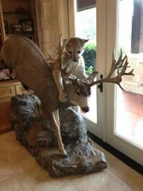 Sweet Mule Deer And Cougar Mount Hunting