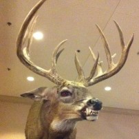 The Meanest Deer Ever