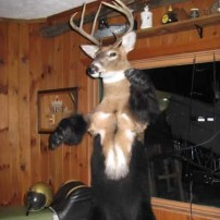 Wierdest Deer Mount ever