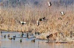 Thinking about starting to duck hunt