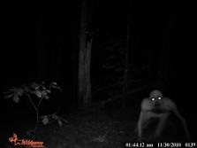 Trail Cam Zombie!