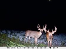 Two Big Boy Bucks