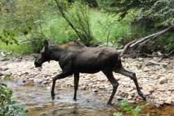 Visited by moose while trout fishing.