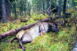 Why I want to hunt in Russia