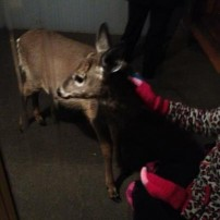 Wild Deer Won't Miss Out on Free Halloween Candy