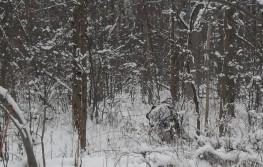 winter whitetails
