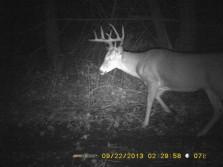 10 Pt. Buck