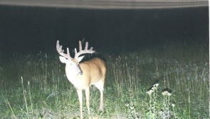 2008 Archery Buck