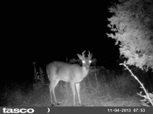 4 point and yearling.