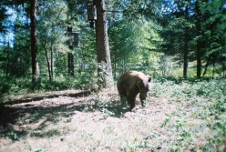 Bear and small 4pt