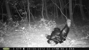 Bear Sleeping in Front of Game Camera for 10 Hours