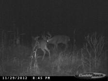 Big Big buck
