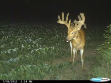 Big Buck With a Little Drop Tine Going On