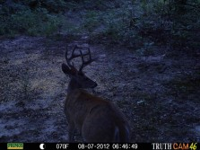 Buck at huntin lease