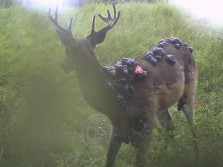 Funny Viral Strange Trail Camera Pictures Hunting
