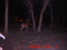 Bucks on our property