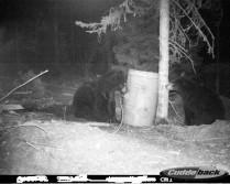 Couple Bears
