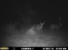 couple of bucks on the property