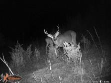 deer game cam