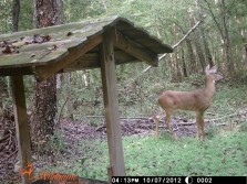 Deer Pics 2012 pt 1