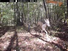 Deer Pics 2012 pt 2