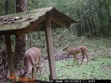 Deer Pics 2012 pt 3