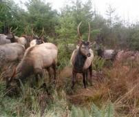 Elk game camera