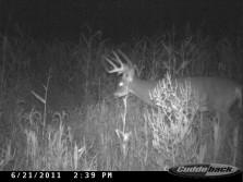 Hard horned big buck