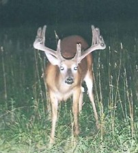 Holy brow tines!