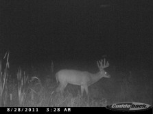Hope to get him this year.