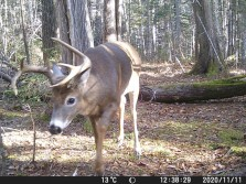 hoping to bag him this year!
