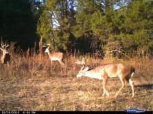 Hunting Service bucks.