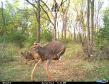 Incredible Trail Cam Capture of Bow Shot