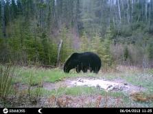 More wildlife