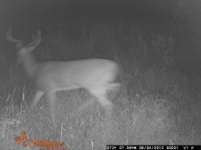 new bucks starting to show up
