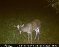 New Farm, Big Bucks
