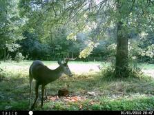 nice buck