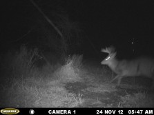 Nice buck that i seen the other night and passed up!