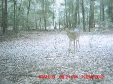 North Fl Bucks