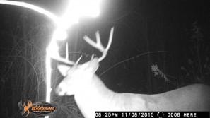 Ohio deer